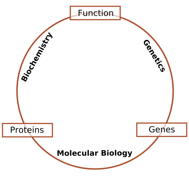 Molecular Biology so what statement example