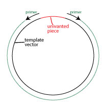 whole-plasmid-amplification-deletin
