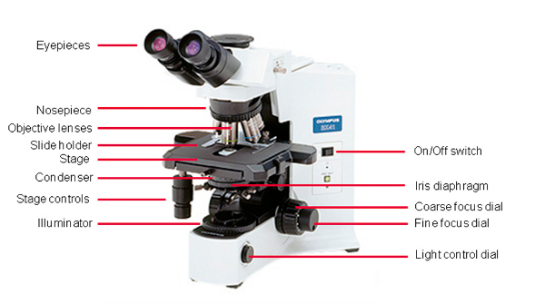 What Everybody Ought to Know About the Light Microscope - Bitesize Bio