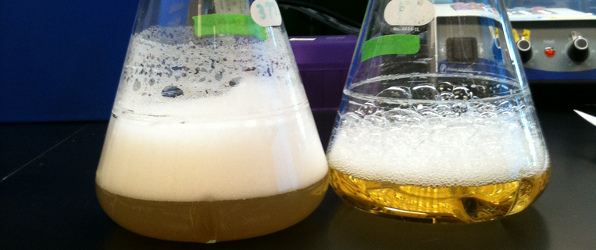 Get Great Yields by Optimizing Your Bacterial Cultures - Bitesize Bio