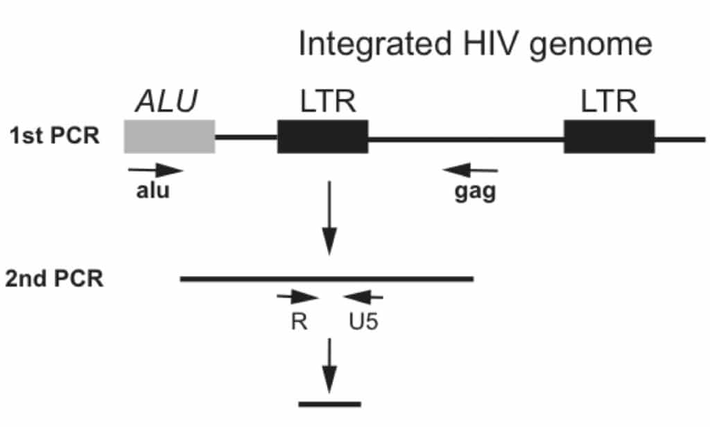 how to quantify integrated hiv genomes using alu-gag pcr
