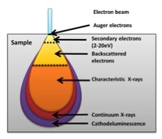 Figure 3. Interaction volume of the electron beam with a sample. In a TEM this will be greater than the depth of the sample. In an SEM the depth to which the beam produces a signal depends on the accelerating voltage of the beam. All signals are produced throughout the interaction volume. The diagram shows the regions from which signals that have the energy to leave the sample and be detected have originated. Backscattered electrons can be detected from deeper within the sample due to their higher energy.