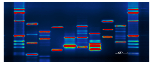 Cloning Large or Complex DNA Fragments
