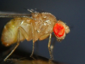cover-image-fruit-fly1