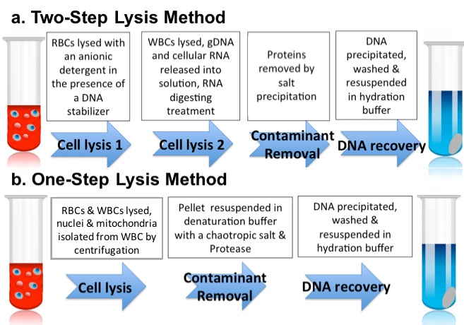 One Step and Two Step Lysis Method