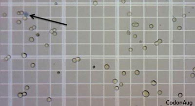 Cell Counting with a Hemocytometer: Easy as 1, 2, 3 ...