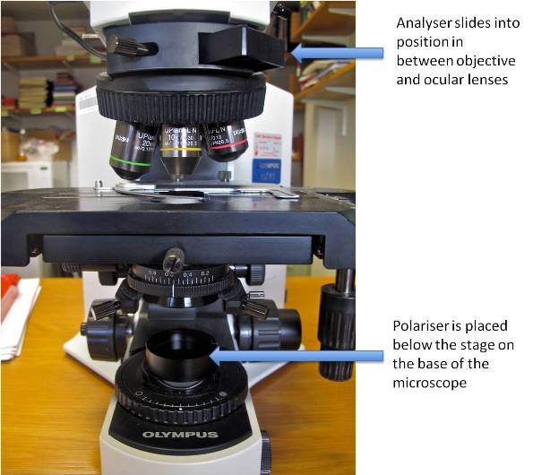 microscopy use and function