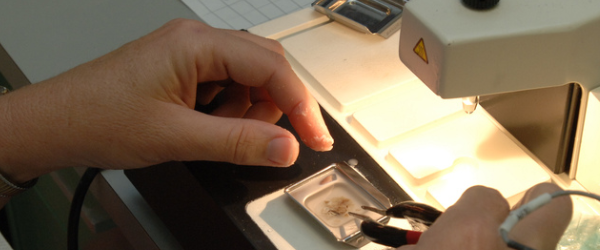 Tissue Processing For Histology: What Exactly Happens ...