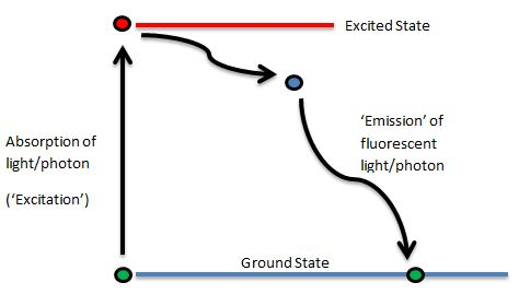 Fluorescence 101 A Beginners Guide To Excitationemission Stokes