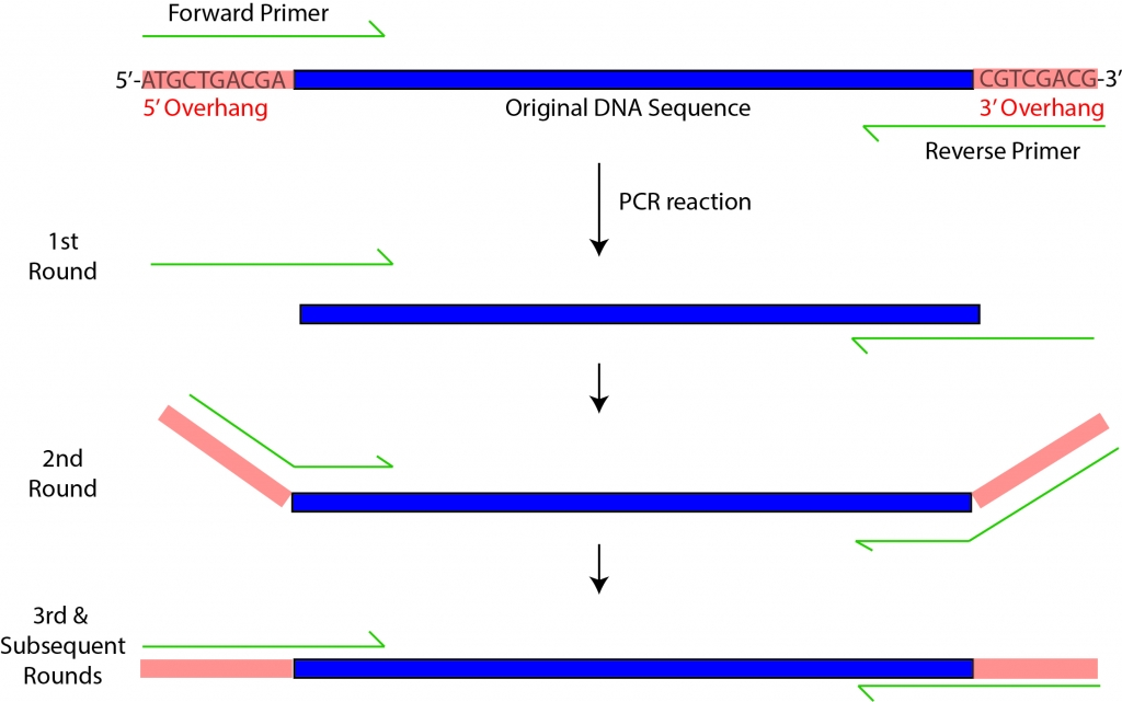 OverhangPCR_Fig1