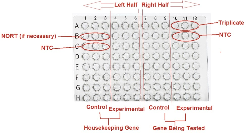 how much template dna for pcr - are you ready for your first qpcr bitesize bio