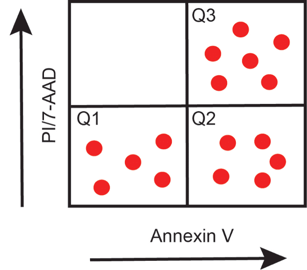Annexin V Staining Example