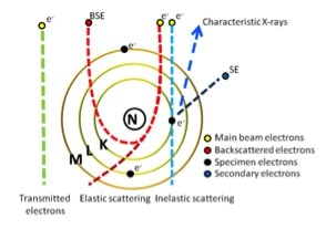 Figure 2. Specimen-beam interaction at an atomic level. The main signals that are relevant for the TEM are transmitted and scattered electrons. The scattering of electrons creates contrast in the final image. For the SEM, the main signals are the secondary electrons and backscattered electrons.