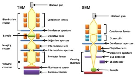 Figure 1. The optics of a basic transmission electron microscope (TEM) and basic scanning electron microscope (SEM).